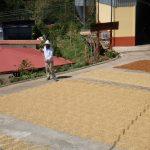 コーヒーの乾燥場