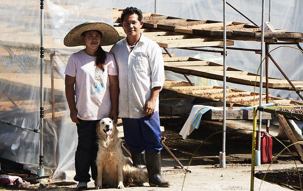 タイのコーヒー生産者